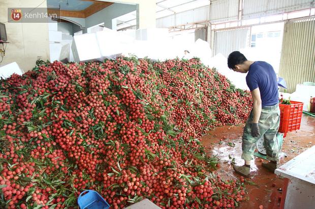 Về Bắc Giang thăm người dân Lục Ngạn trước thông tin 10 ngàn 3kg vải thiều: Làm gì có chuyện chúng tôi ném vải xuống sông - Ảnh 2.