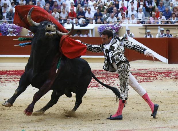 Bò tót thật ra chẳng ghét màu đỏ như ta lầm tưởng, chúng nổi điên tấn công dũng sĩ đấu bò hóa ra là vì điều này - Ảnh 1.