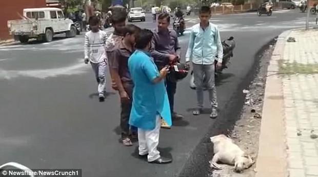 Dư luận Ấn Độ phẫn nộ vì nhóm công nhân thản nhiên rải nhựa đường lên một chú chó đang nằm ngủ - Ảnh 2.