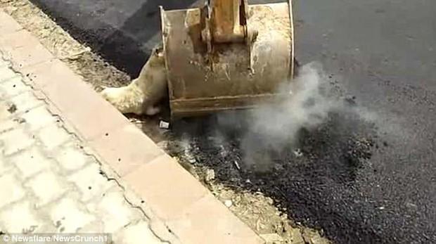 Dư luận Ấn Độ phẫn nộ vì nhóm công nhân thản nhiên rải nhựa đường lên một chú chó đang nằm ngủ - Ảnh 3.