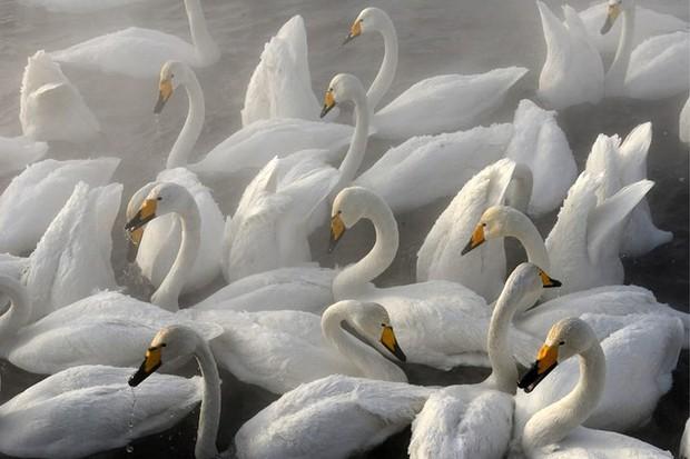 Những bức ảnh cực kỳ ấn tượng về các loài động vật trên khắp thế giới - Ảnh 13.