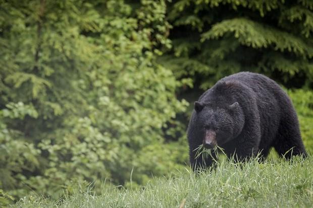Những bức ảnh cực kỳ ấn tượng về các loài động vật trên khắp thế giới - Ảnh 7.
