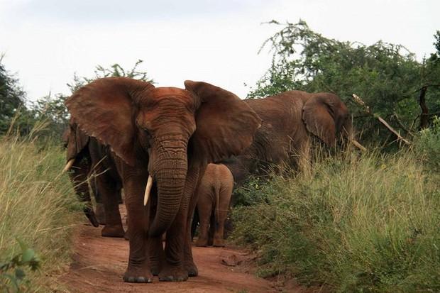 Những bức ảnh cực kỳ ấn tượng về các loài động vật trên khắp thế giới - Ảnh 9.