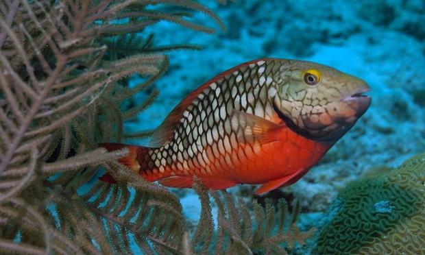 Những bức ảnh cực kỳ ấn tượng về các loài động vật trên khắp thế giới - Ảnh 10.