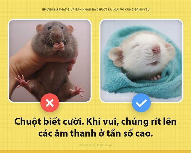 Alo! Là tôi, chuột đây! Và hy vọng nhờ câu chuyện này mà các ông sẽ thấy tôi đáng yêu hơn - Ảnh 1.