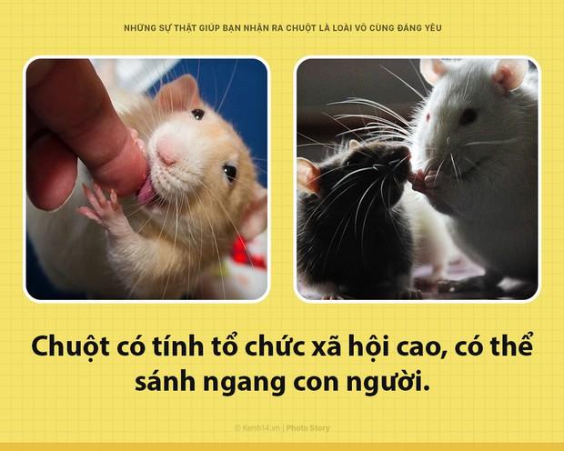 Alo! Là tôi, chuột đây! Và hy vọng nhờ câu chuyện này mà các ông sẽ thấy tôi đáng yêu hơn - Ảnh 2.