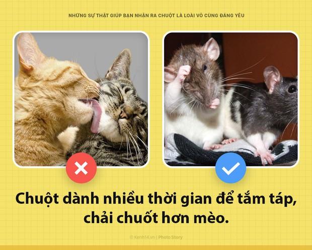 Alo! Là tôi, chuột đây! Và hy vọng nhờ câu chuyện này mà các ông sẽ thấy tôi đáng yêu hơn - Ảnh 3.