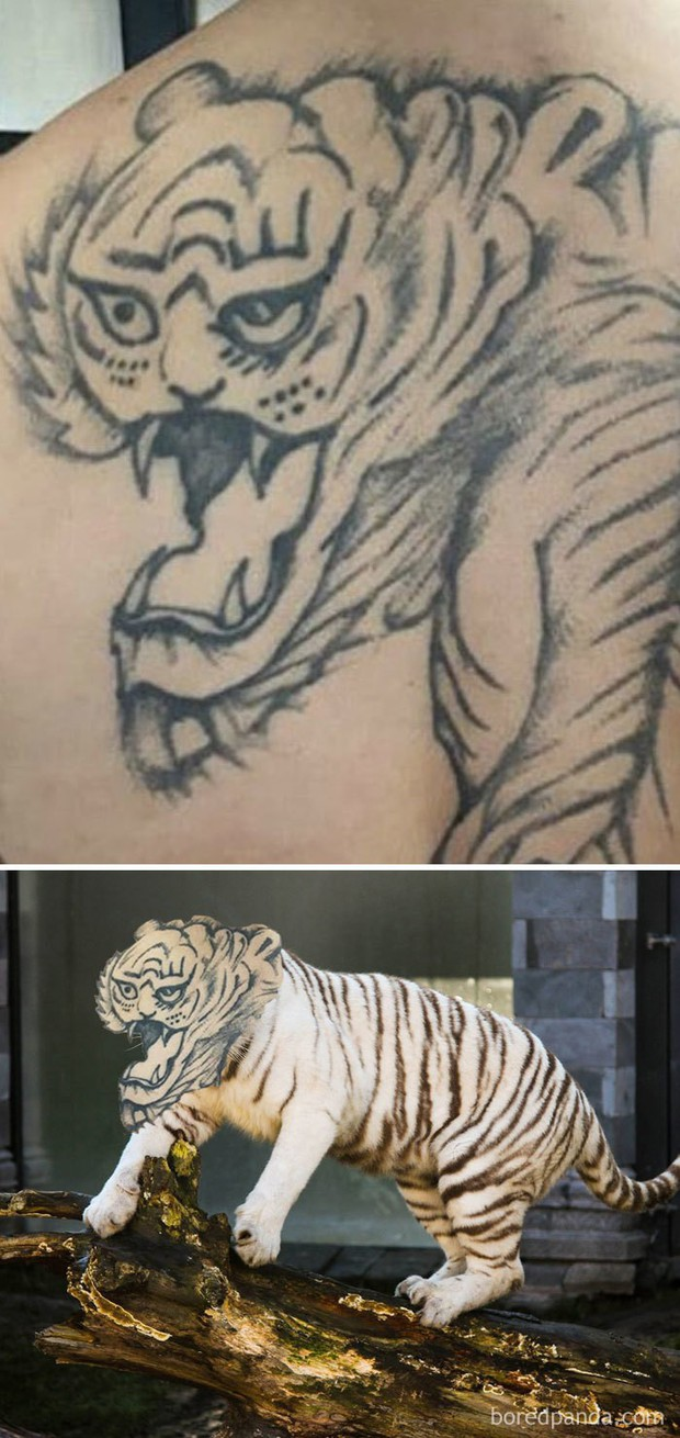 Những hình xăm thất bại được cắt ra lắp vào nhân vật gốc: Mãnh hổ mũi sưng, sư tử ngáo lòi đều có cả - Ảnh 6.