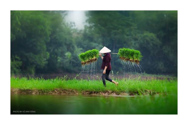 Bộ ảnh làng mạc Việt Nam trong lành mát rượi của một thầy giáo cấp 3 khiến dân tình ào ào về quê dịp cuối tuần - Ảnh 5.