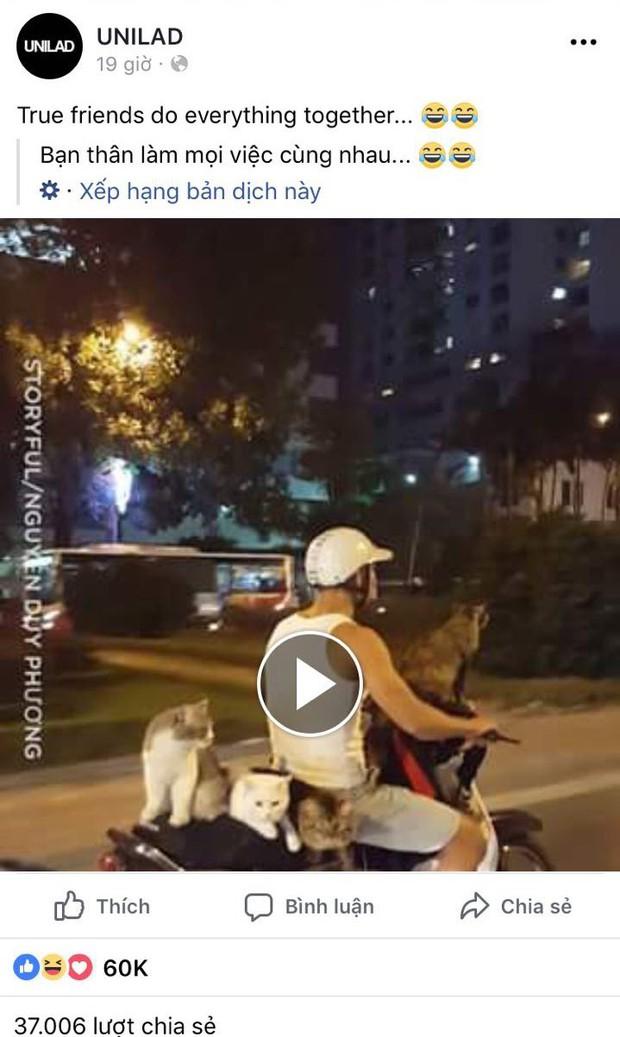 Thanh niên Hà Nội đèo cả gia đình mèo đi chơi phố bằng xe máy bất ngờ nổi tiếng trên MXH nước ngoài - Ảnh 1.