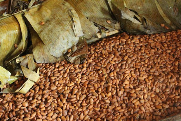 Hành trình biến hạt ca cao thành món chocolate vạn người mê qua lời kể của người thợ lành nghề - Ảnh 8.