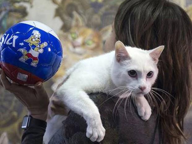 Chú mèo ở Cung điện Mùa đông kế thừa bạch tuộc Paul - Ảnh 1.