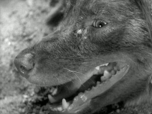 Dấu ấn của quái kiệt Nhật Bản Akira Kurosawa trong Isle of Dogs - Ảnh 5.