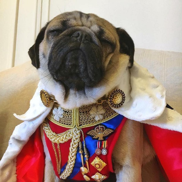 Các bạn trẻ tạm dừng bóc giá outfit đi, vào mà xem chú rich dog đang nổi như cồn trên MXH đây này! - Ảnh 6.