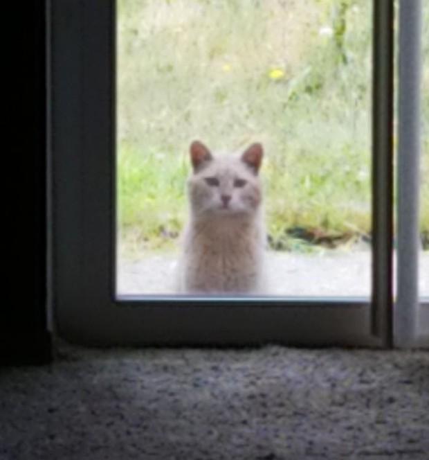 Góc ấm lòng: Cô gái tận tình chăm sóc chú mèo hoang gần nhà sau khi đọc được bức thư xúc động của chủ nhà cũ để lại - Ảnh 1.