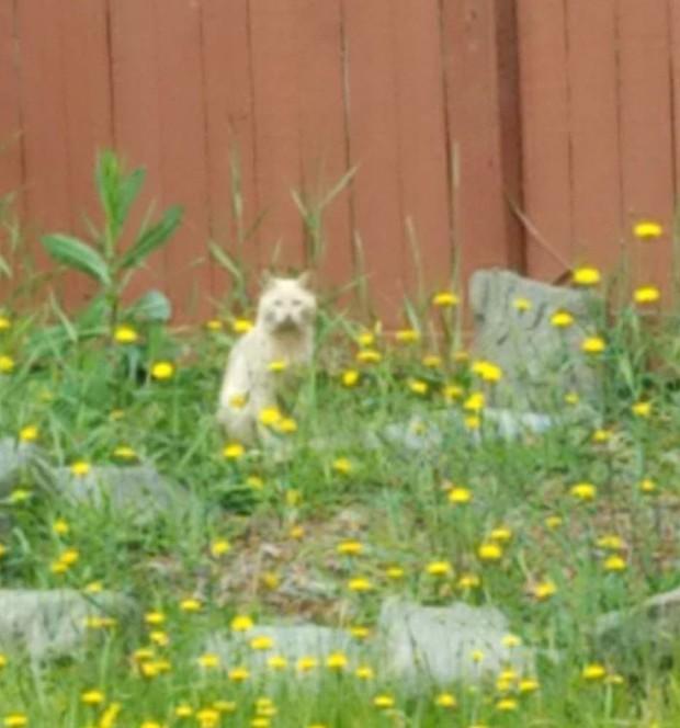 Góc ấm lòng: Cô gái tận tình chăm sóc chú mèo hoang gần nhà sau khi đọc được bức thư xúc động của chủ nhà cũ để lại - Ảnh 4.