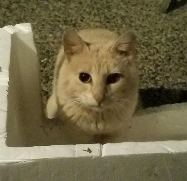 Góc ấm lòng: Cô gái tận tình chăm sóc chú mèo hoang gần nhà sau khi đọc được bức thư xúc động của chủ nhà cũ để lại - Ảnh 6.