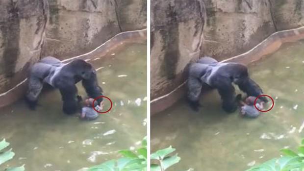 Trung Quốc: Cùng mẹ cho khỉ ăn ở vườn thú, bé gái bất ngờ bị con vật... đấm vào mặt - Ảnh 3.