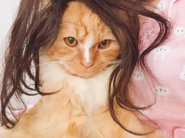 Chùm ảnh: Các sen thi nhau đội tóc giả cho boss xem đứa nào bảnh nhất - Ảnh 5.