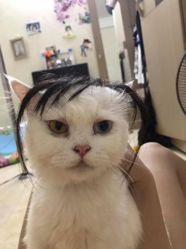 Chùm ảnh: Các sen thi nhau đội tóc giả cho boss xem đứa nào bảnh nhất - Ảnh 2.