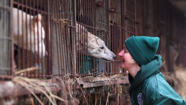 Cộng đồng thích ăn thịt chó Hàn Quốc phản đối phán quyết cấm làm thịt của tòa án và tuyên bố sẽ kiện tới cùng - Ảnh 1.