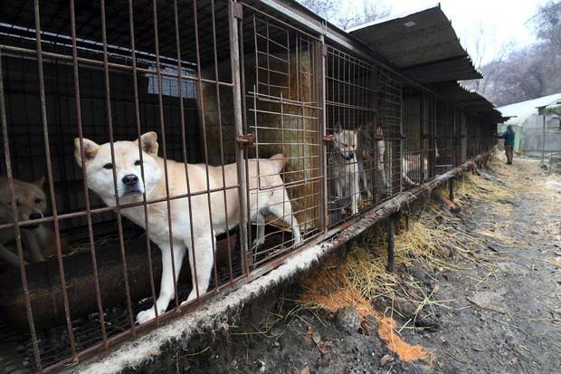 Cộng đồng thích ăn thịt chó Hàn Quốc phản đối phán quyết cấm làm thịt của tòa án và tuyên bố sẽ kiện tới cùng - Ảnh 2.