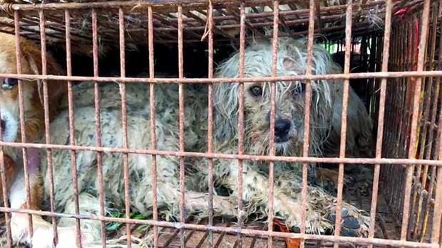 Cộng đồng thích ăn thịt chó Hàn Quốc phản đối phán quyết cấm làm thịt của tòa án và tuyên bố sẽ kiện tới cùng - Ảnh 3.
