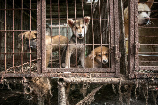 Cộng đồng thích ăn thịt chó Hàn Quốc phản đối phán quyết cấm làm thịt của tòa án và tuyên bố sẽ kiện tới cùng - Ảnh 4.