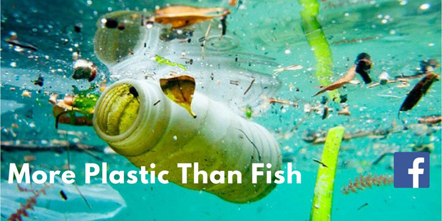 Nếu rác nhựa gây khủng hoảng như thế thì tại sao không cấm dùng đồ nhựa luôn? Câu trả lời không đơn giản như bạn nghĩ đâu - Ảnh 1.