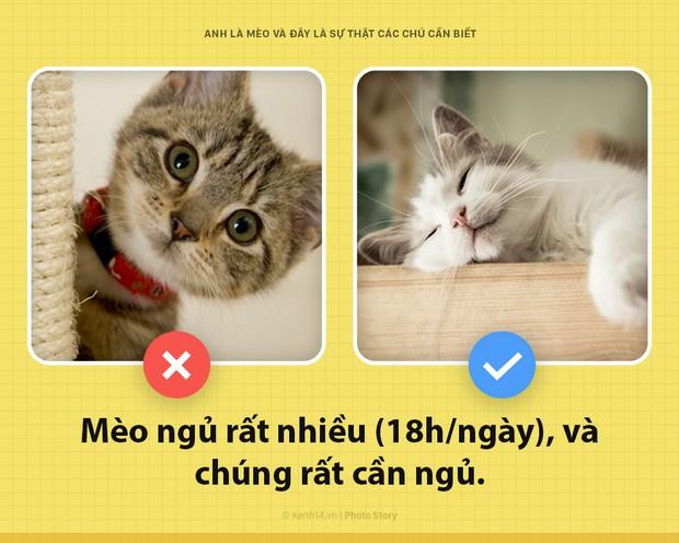 Chào các sen! Anh là mèo và đây là những sự thật các sen nên biết để phục vụ boss này tốt hơn - Ảnh 1.