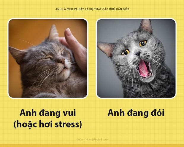 Chào các sen! Anh là mèo và đây là những sự thật các sen nên biết để phục vụ boss này tốt hơn - Ảnh 2.