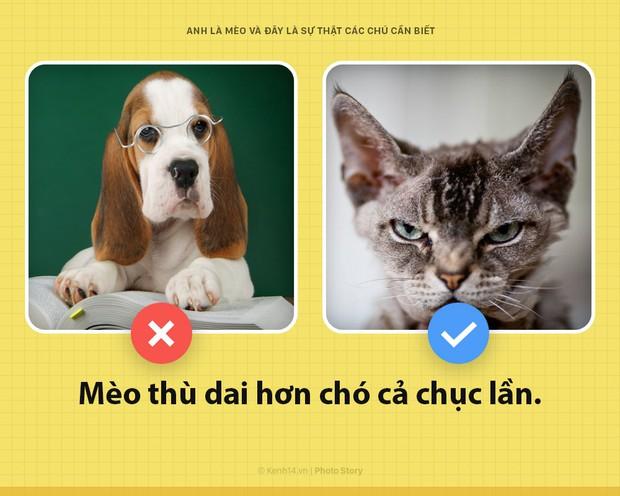 Chào các sen! Anh là mèo và đây là những sự thật các sen nên biết để phục vụ boss này tốt hơn - Ảnh 4.