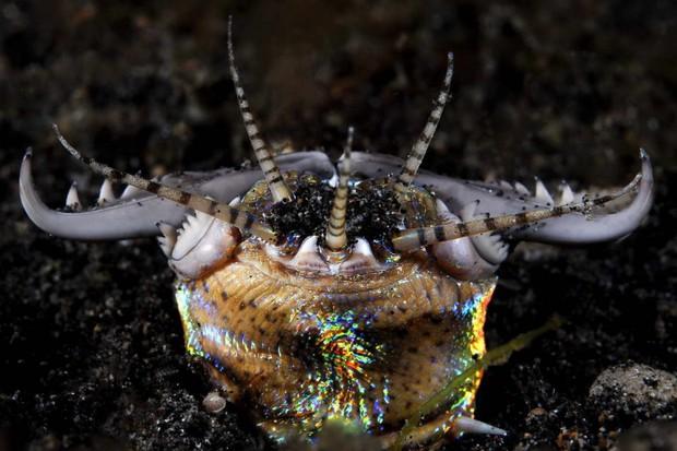 Con sâu kinh khủng này tên là Bobbit, nhưng nguồn gốc của cái tên ấy sẽ khiến bạn lạnh gáy hơn nữa - Ảnh 4.