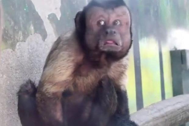 Trung Quốc: Chú khỉ nổi tiếng MXH vì có gương mặt thất thần giống hệt người vừa thua độ World Cup - Ảnh 1.