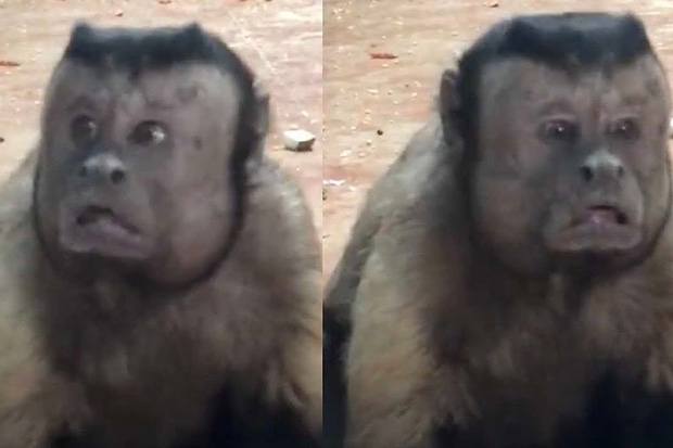 Trung Quốc: Chú khỉ nổi tiếng MXH vì có gương mặt thất thần giống hệt người vừa thua độ World Cup - Ảnh 2.