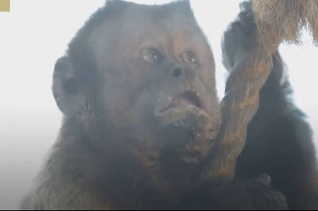 Trung Quốc: Chú khỉ nổi tiếng MXH vì có gương mặt thất thần giống hệt người vừa thua độ World Cup - Ảnh 4.