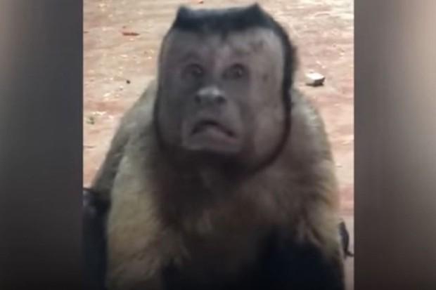 Trung Quốc: Chú khỉ nổi tiếng MXH vì có gương mặt thất thần giống hệt người vừa thua độ World Cup - Ảnh 3.