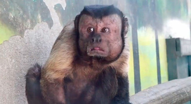 Trung Quốc: Chú khỉ nổi tiếng MXH vì có gương mặt thất thần giống hệt người vừa thua độ World Cup - Ảnh 5.
