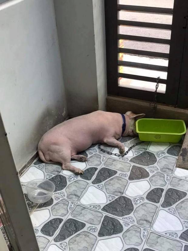 Góc nguỵ trang: Ai cũng tưởng đang nhìn một con lợn cho đến khi nó ngẩng đầu lên - Ảnh 2.