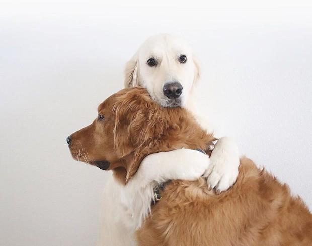 Câu chuyện cảm động của 2 chú chó lúc nào cũng dính lấy nhau như hình với bóng, sở hữu gần 500 nghìn lượt follow trên Instagram - Ảnh 5.