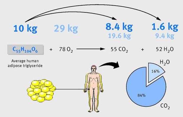 Nhà khoa học Mỹ giải thích đốt cháy chất béo là gì, và tại sao gọi là đốt? - Ảnh 4.