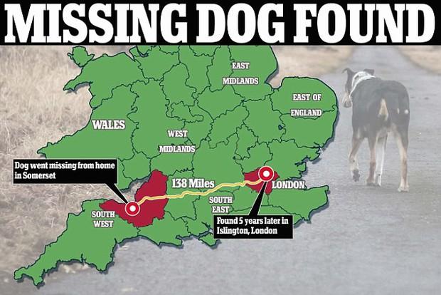 Anh: Chú chó nhỏ trở về với gia đình sau 5 năm bị bắt cóc dù ở cách xa nhà 200 km - Ảnh 3.