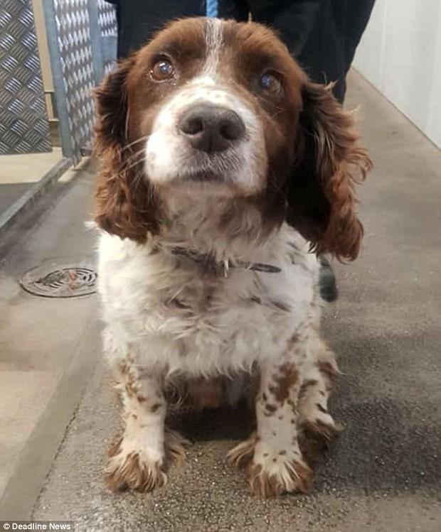 Anh: Chú chó nhỏ trở về với gia đình sau 5 năm bị bắt cóc dù ở cách xa nhà 200 km - Ảnh 2.