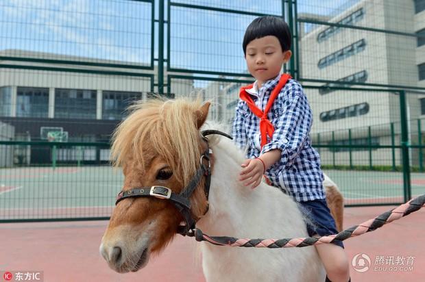 Để tạo hứng thú học môn Sinh, 1 trường tiểu học ở Trung Quốc đã nhập hẳn 2 con ngựa từ Anh về nuôi - Ảnh 1.