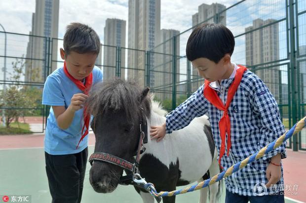 Để tạo hứng thú học môn Sinh, 1 trường tiểu học ở Trung Quốc đã nhập hẳn 2 con ngựa từ Anh về nuôi - Ảnh 2.