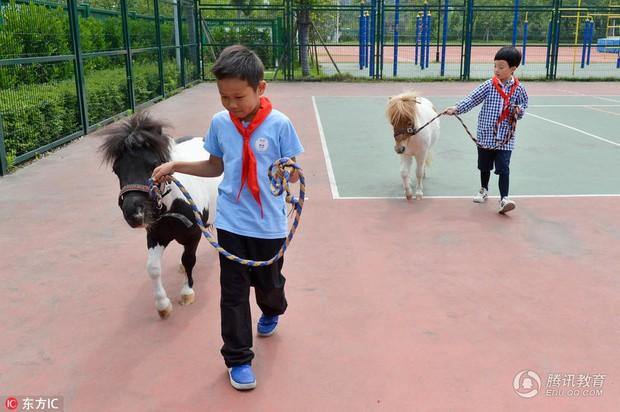 Để tạo hứng thú học môn Sinh, 1 trường tiểu học ở Trung Quốc đã nhập hẳn 2 con ngựa từ Anh về nuôi - Ảnh 3.