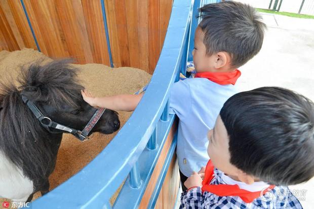 Để tạo hứng thú học môn Sinh, 1 trường tiểu học ở Trung Quốc đã nhập hẳn 2 con ngựa từ Anh về nuôi - Ảnh 4.