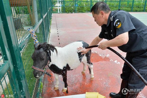 Để tạo hứng thú học môn Sinh, 1 trường tiểu học ở Trung Quốc đã nhập hẳn 2 con ngựa từ Anh về nuôi - Ảnh 5.