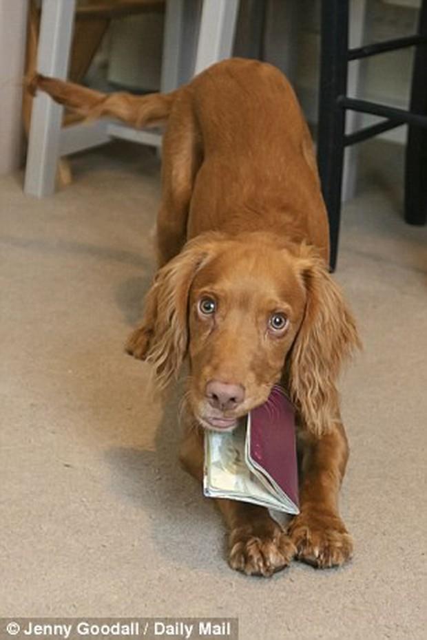 Góc đen đủi: Gia đình 5 người bị chó cưng cắn nát 2 quyển hộ chiếu ngay trước ngày đi nghỉ dưỡng xa xỉ - Ảnh 3.