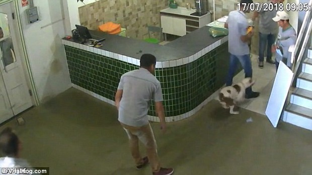 Clip 3 anh công nhân sợ mất mật khi thấy chú chó pitbull thân thiện tới gần khiến dân mạng quốc tế cười như được mùa - Ảnh 3.